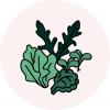 Salate Grafik