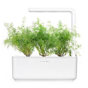 Dill Smart Garden