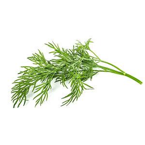 Dill Pflanze