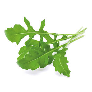 Rucola Pflanze