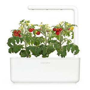 Mini Tomate Smart Garden