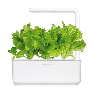 Grüner Salat Smart Garden